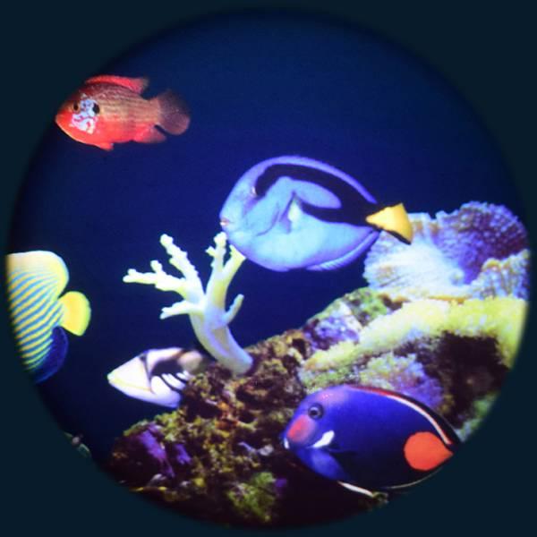 Solar max wheel coral reef